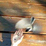 main+oiseau